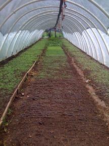 <p>Permaculture farm</p>